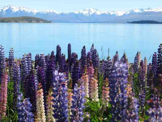 flower mountain lake
